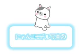 にゃんこモデル写真②