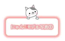 にゃんこモデル写真①